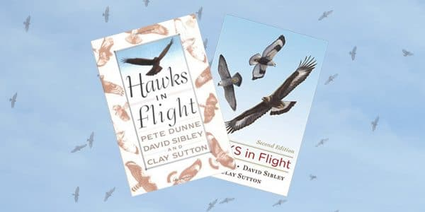 https://www.amazon.com/Hawks-Flight-Second-David-Sibley/dp/0395709598/ref=sr_1_1?ie=UTF8&qid=1515426651&sr=8-1&keywords=hawks+in+flight